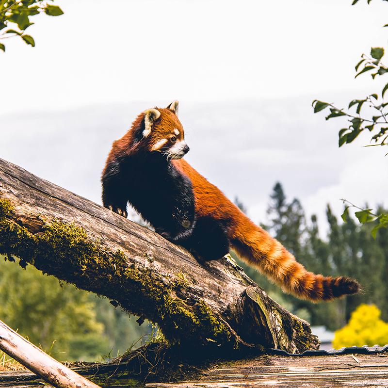 Djur, Natur och Kultur för en hållbar värld.